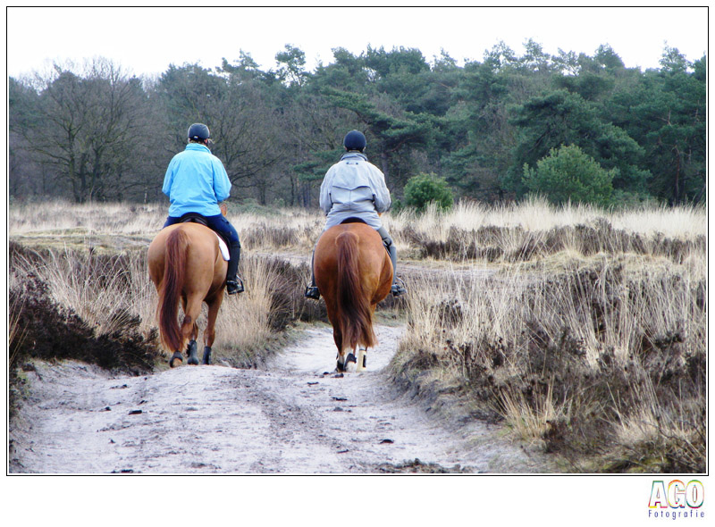paarden-op-de-hei